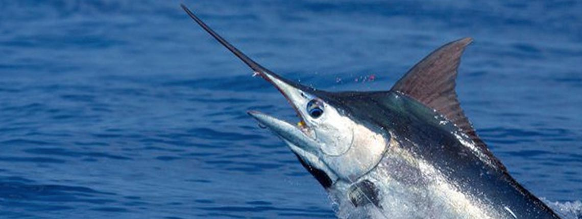 Marlin-CostaRica-Header